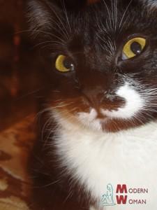 Как понять кошачий язык