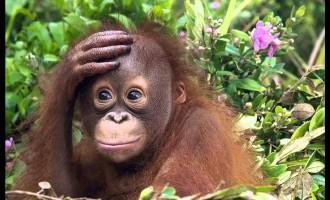 2016 –год огненной обезьяны