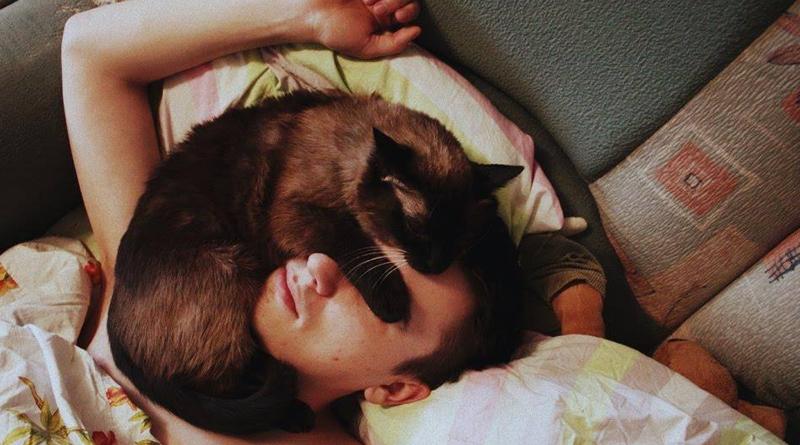 Почему кошки любят спать на нас