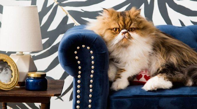 Как делать уборку, когда в доме живет кот