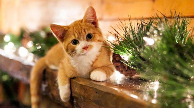 Безопасный дом для кошки