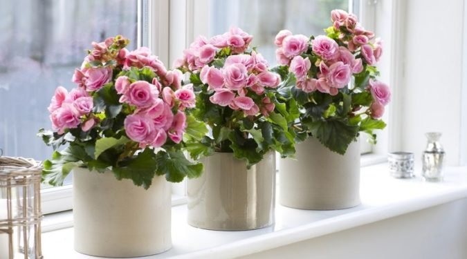 Комнатные растения, приносящие удачу