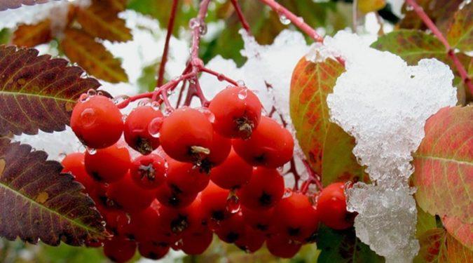Целебные дары природы осенние ягоды