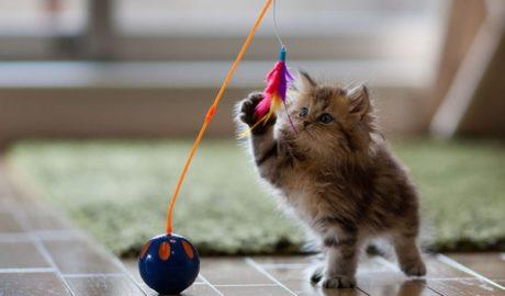 Игрушки для вашей кошки